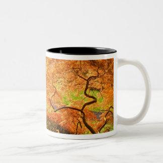 USA, Delaware, Wilmington. Japanese maple Two-Tone Coffee Mug