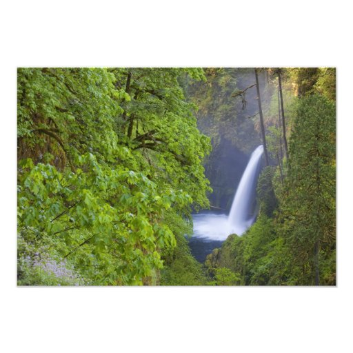 USA, Eagle Creek, Columbia Gorge, Oregon. 2 Photographic Print