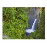 USA, Eagle Creek, Columbia Gorge, Oregon. 2 Post Cards
