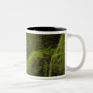 USA, Eagle Creek, Columbia Gorge, Oregon. 3 Two-Tone Coffee Mug