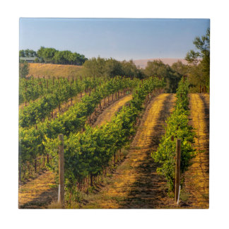 USA, Eastern Washington, Walla Walla Vineyards Ceramic Tile