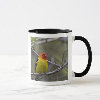 USA, Ellensburg, Washington. Male Western Mug