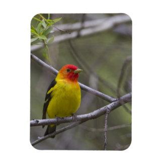 USA, Ellensburg, Washington. Male Western Rectangular Photo Magnet