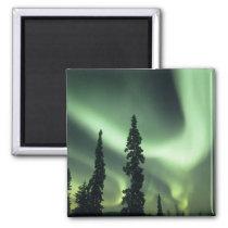 USA, Fairbanks area, Central Alaska, Aurora 2 Magnet