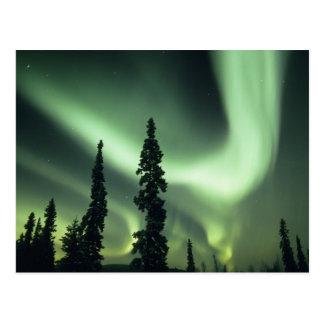 USA, Fairbanks area, Central Alaska, Aurora 2 Postcard