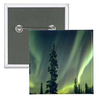 USA, Fairbanks area, Central Alaska, Aurora Button