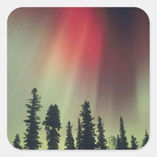 USA, Fairbanks area, Central Alaska, Aurora Square Sticker