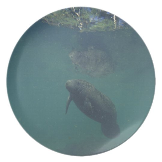 USA, FL, Manatee Dinner Plate