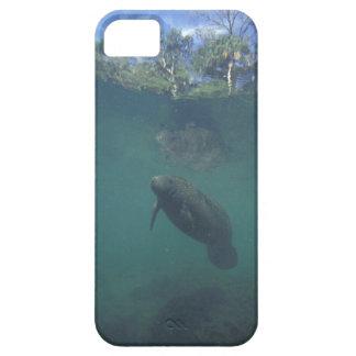 USA, FL, Manatee iPhone SE/5/5s Case