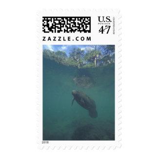 USA, FL, Manatee Postage