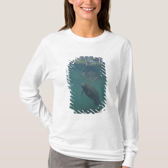 USA, FL, Manatee T-Shirt