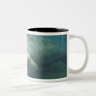 USA, FL, Manatee Two-Tone Coffee Mug