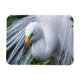 USA, Florida, Anastasia Island, Alligator Farm Rectangular Photo Magnet
