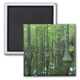 USA, Florida, Apalachicola National Forest, Bald 2 Inch Square Magnet