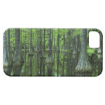 USA, Florida, Apalachicola National Forest, Bald iPhone 5 Cases