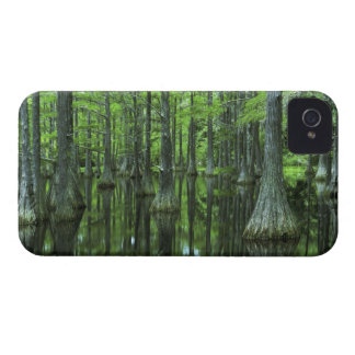 USA, Florida, Apalachicola National Forest, Bald Case-Mate iPhone 4 Cases