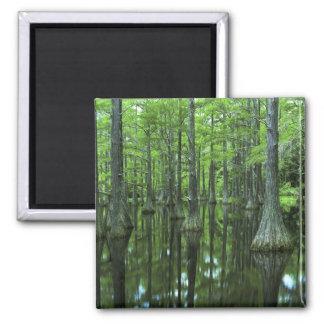 USA, Florida, Apalachicola National Forest, Bald Magnet