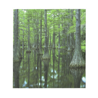 USA, Florida, Apalachicola National Forest, Bald Note Pad