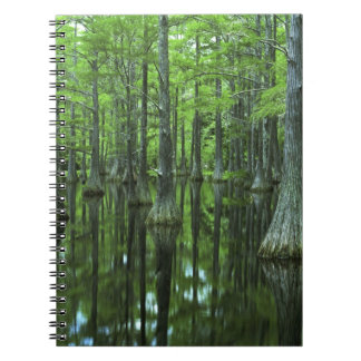 USA, Florida, Apalachicola National Forest, Bald Spiral Notebook
