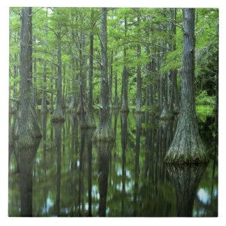 USA, Florida, Apalachicola National Forest, Bald Tile
