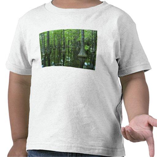 USA, Florida, Apalachicola National Forest, Bald Tee Shirts