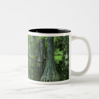USA, Florida, Apalachicola National Forest, Bald Two-Tone Coffee Mug
