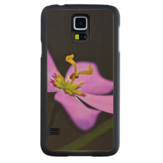 USA, Florida, Big Cypress National Preserve Carved® Maple Galaxy S5 Slim Case