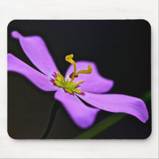 USA, Florida, Big Cypress National Preserve Mouse Pad