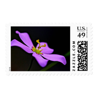 USA, Florida, Big Cypress National Preserve Postage