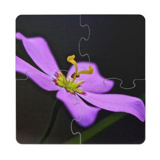 USA, Florida, Big Cypress National Preserve Puzzle Coaster