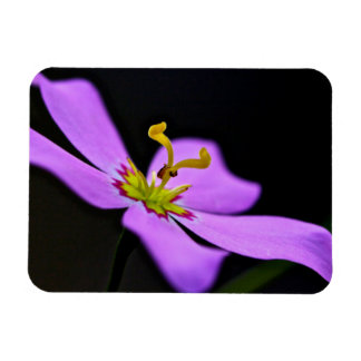 USA, Florida, Big Cypress National Preserve Rectangular Photo Magnet