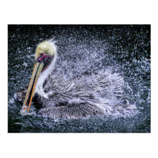 USA, Florida. Brown Pelican Postcard