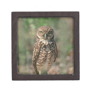 USA, Florida, Burrowing Owl. 2 Keepsake Box