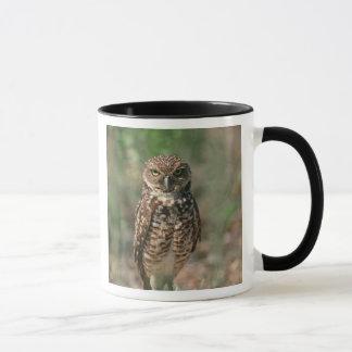 USA, Florida, Burrowing Owl. 2 Mug