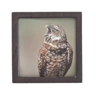 USA, Florida, Burrowing Owl. Jewelry Box