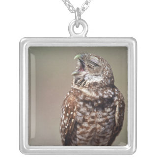 USA, Florida, Burrowing Owl. Silver Plated Necklace