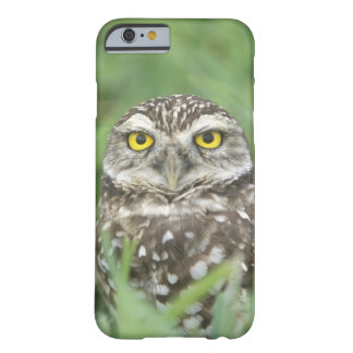 USA, Florida, Cape Coral, Burrowing Owl (Athene Barely There iPhone 6 Case