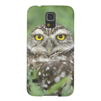 USA, Florida, Cape Coral, Burrowing Owl (Athene Galaxy S5 Case