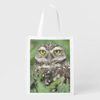 USA, Florida, Cape Coral, Burrowing Owl (Athene Grocery Bag
