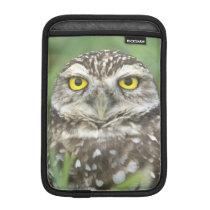 USA, Florida, Cape Coral, Burrowing Owl (Athene iPad Mini Sleeve