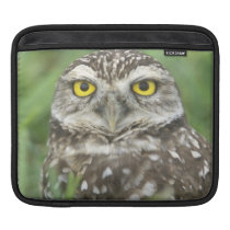 USA, Florida, Cape Coral, Burrowing Owl (Athene iPad Sleeve
