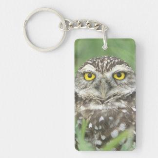 USA, Florida, Cape Coral, Burrowing Owl (Athene Keychain