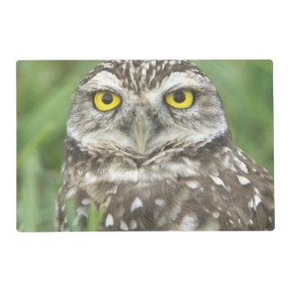 USA, Florida, Cape Coral, Burrowing Owl (Athene Placemat