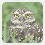 USA, Florida, Cape Coral, Burrowing Owl (Athene Sticker