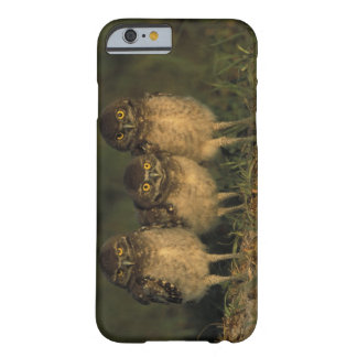 USA, Florida, Cape Coral. Three Burrowing Owls Barely There iPhone 6 Case
