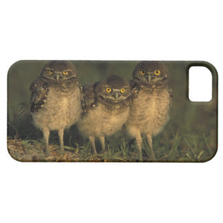 USA, Florida, Cape Coral. Three Burrowing Owls iPhone SE/5/5s Case