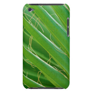 USA, Florida. Close Up Of Palm Fronds Case-Mate iPod Touch Case