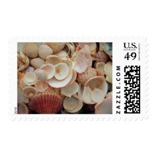 USA, Florida. Close Up Of Shells On Santa Rosa Postage