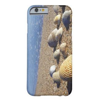 USA, Florida, Coastal Sea Shells Barely There iPhone 6 Case