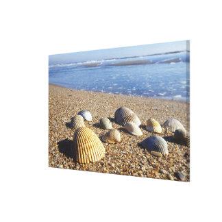 USA, Florida, Coastal Sea Shells Canvas Print